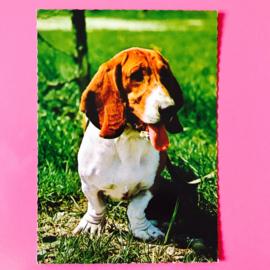Hond 16