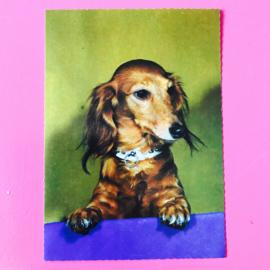 Hond 3
