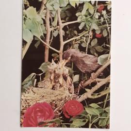 Vintage kaarten vogels