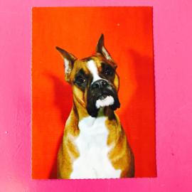 Hond 6