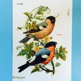 Decal vogeltjes
