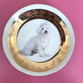 Schoteltje hondje met kroontje