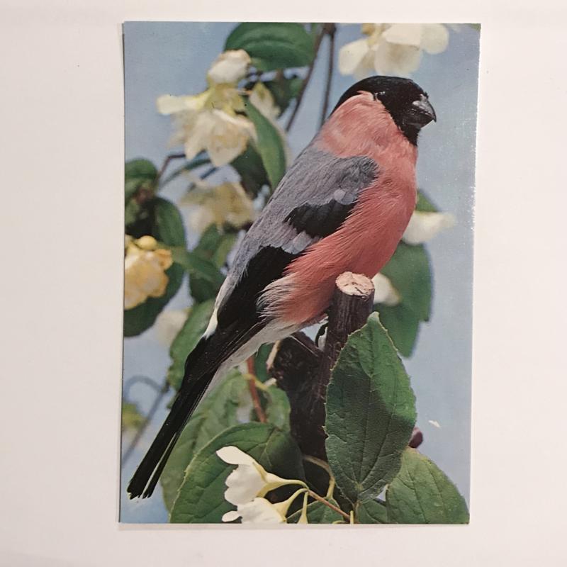 Vogel 11