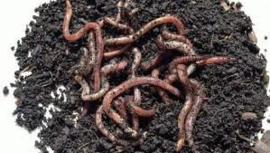 regenworm 175 gram
