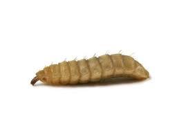 Calcium phoenix wormen 75 gram