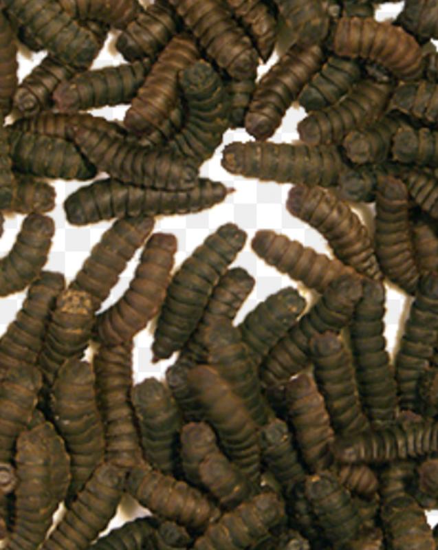 hermetia / blacksoldierfly / calciumworm 400 gram insectonline