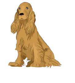 Middelgrote Hond 35 tot 50 cm
