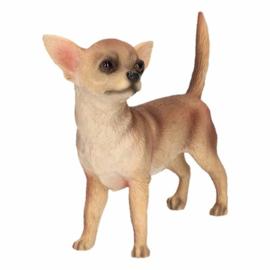 Kleine hond 20 tot 35 cm