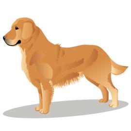 Grote Hond 50 tot 60 cm