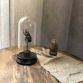 Stolp met donkerbruine kever - 15x29 cm