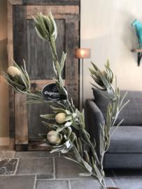 Protea tak - 77 cm