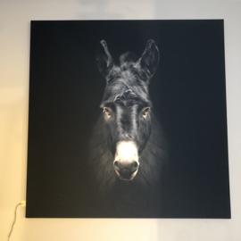 Schilderij op canvas - Ezel - 125x125 cm