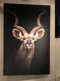 Schilderij op canvas - Springbok Kudu - 100x150 cm