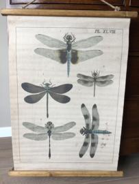 vintage look schoolplaat libelles