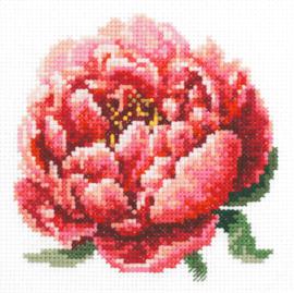 Borduurpakket Kruissteek | Rode pioenroos (Red Peony - Chudo Igla)