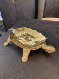 tray tortoise
