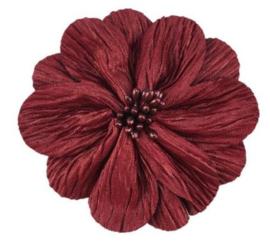 Bloem Lily 8cm bordeaux