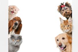 Paardenmelk voor huisdieren