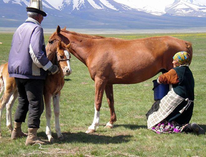 paardenmelk gezond