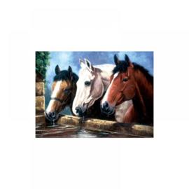 Schild.op nummers Junior L 27,5x35cm Paarden hoofd