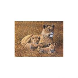 Schild.op  nummers Junior L 27,5x35cm Leeuwen familie