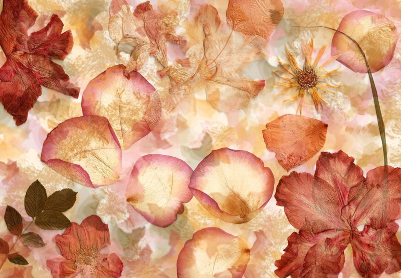 Fotobehang - Dried Flowers - B 366cm x H 254 cm - Multi