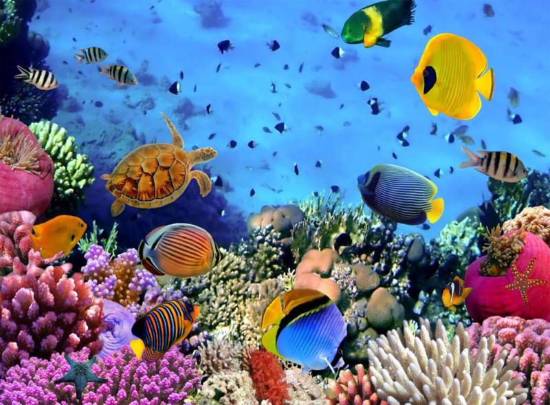 Fotobehang Onder de zee -H. 232 cm x B.315 cm - Multi