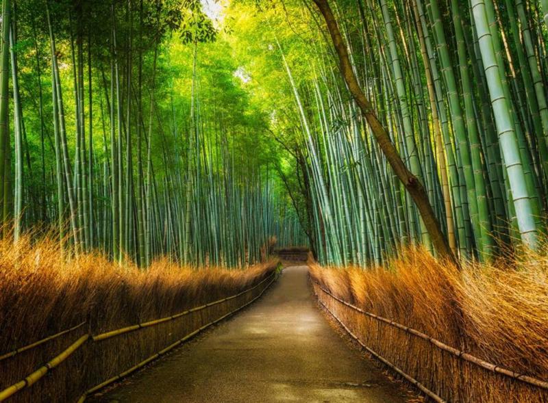 Bamboo - Fotobehang - H 232 cm x B 315 cm - Multi