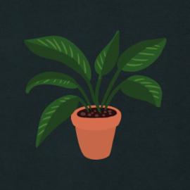 Plant Women's Hoodie | Black