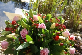 Biedemeijer rose