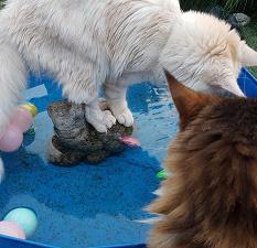 Katten en waterpret   >>>