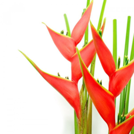 Sauna opgietgeur Jungle Flowers