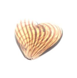 glaskraal hart hol bruin 17x19mm
