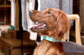 Hundehalsband Blue Lagoon Leder Halsband