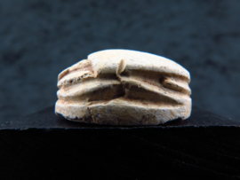 Ancient Egyptian steatite scarab with hieroglyphs: Protection of the rebirth of the Lord