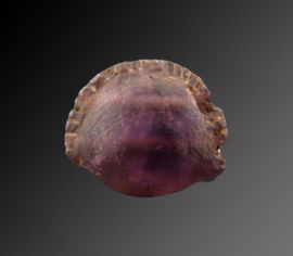 Egyptian Amethyst Cowrie shell amulet