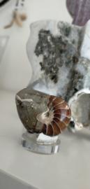 Nautilus Fossiel
