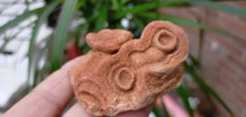 Woestijn Bariet bloem (Stromatoliet)