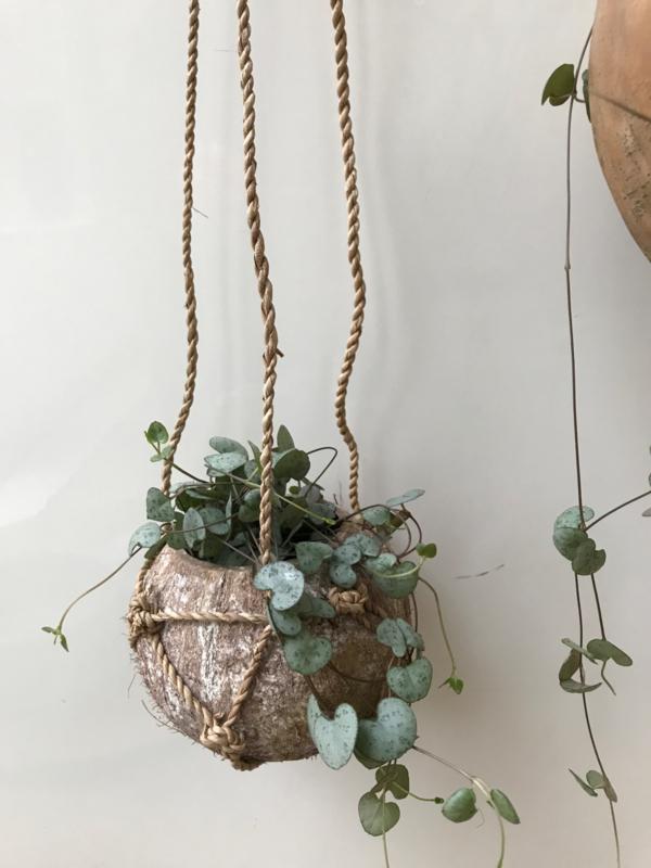 Cocosnut hanger klein