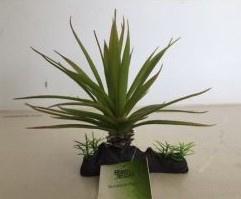 RepTech Terrarium Plant Thin Succulent