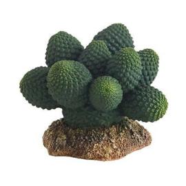 Kaktus Atacamma, Höhe 7 cm