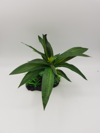 RepTech Terrarium Plant Single Bromeliad