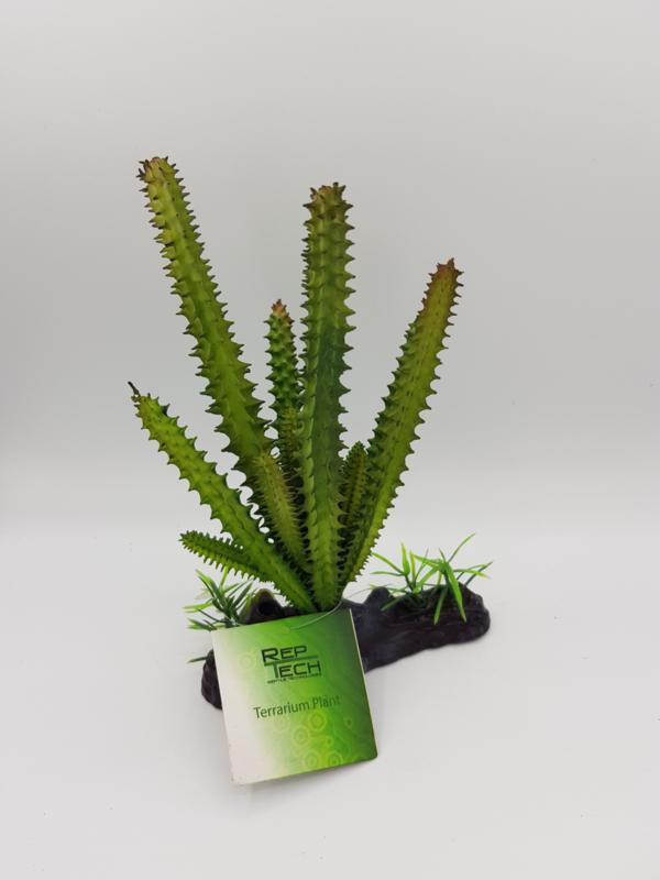 RT Terrarium plant Simple Cactus