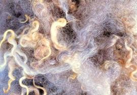 Leicester longwool coloured - gesorteerd en gekamd - 10 gram