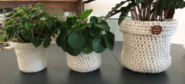 Plant in stoere hoes