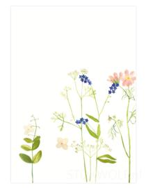 postkaart | Cosmea