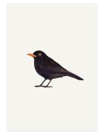 postkaart | Merel