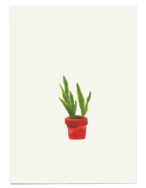 postkaart | Sanseveria