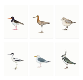mini cards | Birds waddensea & field (set)