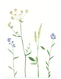 postcard | Mountain flowers lilac